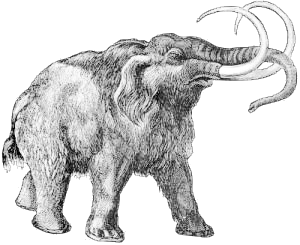 Woolly Mammoth clipart #13