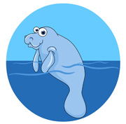 Manatee clipart Swimming Manatee clipart Search manatee
