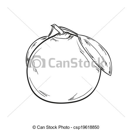 Tangerine clipart The sketch tangerine background of