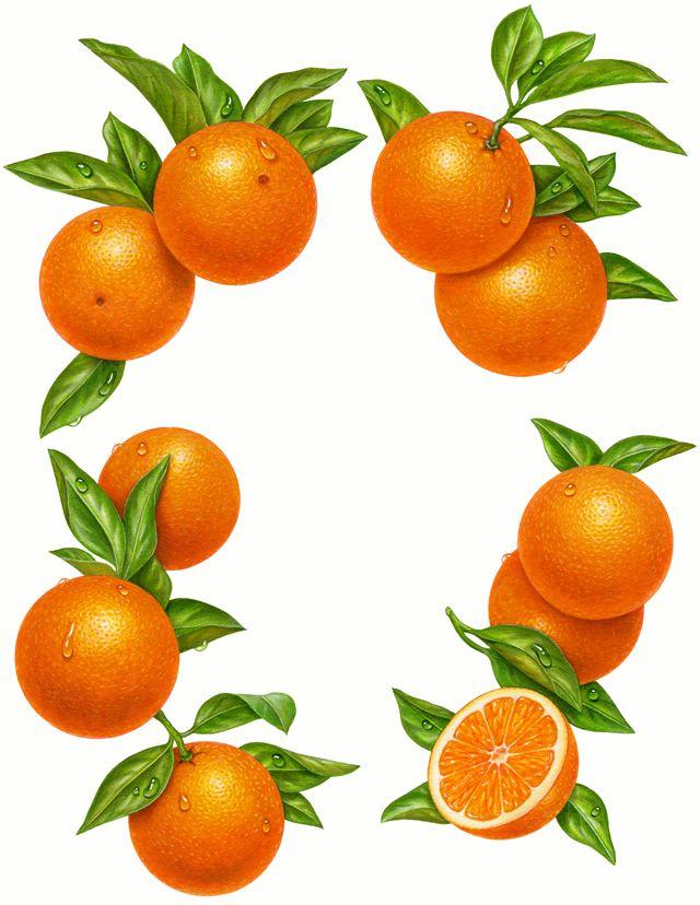 Mandarin clipart diet About clipart Pinterest Clipart Fruit