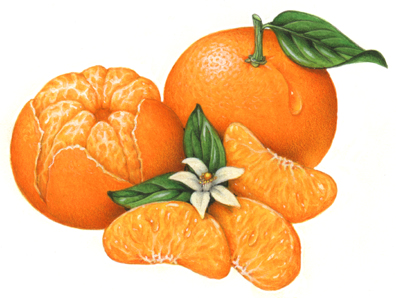 Mandarin clipart diet Mandarin One one peeled with