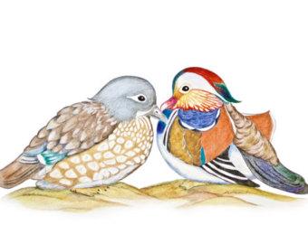 Mandarin Duck clipart & of Certificate Love Feng