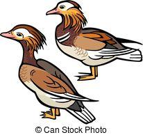 Mandarin Duck clipart Illustration Ducks  Art vector