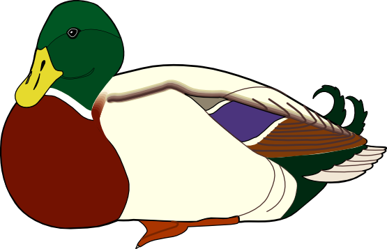 Wood Duck clipart Duck Free Colorful Duck Clip