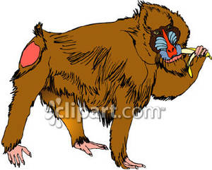 Baboon clipart mandrill A Eating Clipart Picture Eating