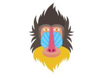 Mandrill clipart Gibbon clipart Clipart 57 Size: