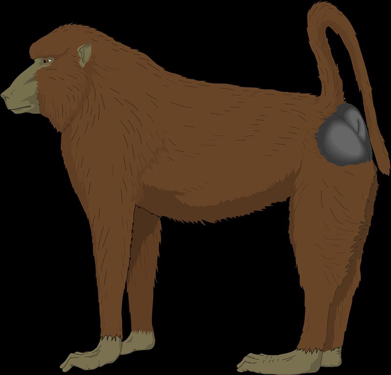 Baboon clipart happy monkey Art Baboon Domain Public &