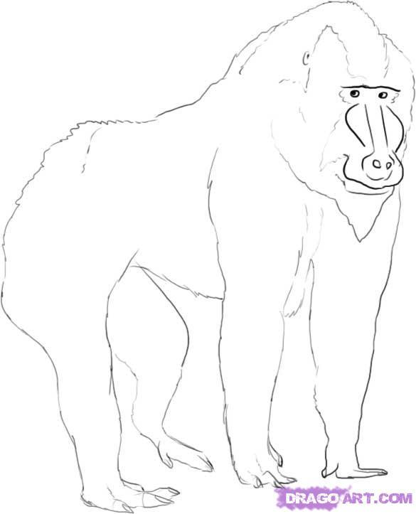 Mandrill clipart Mandrill baboon photo#2 drawing Drawing