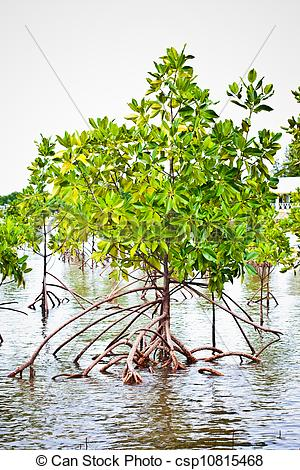 Mangrove clipart Search csp10815468  forest Image