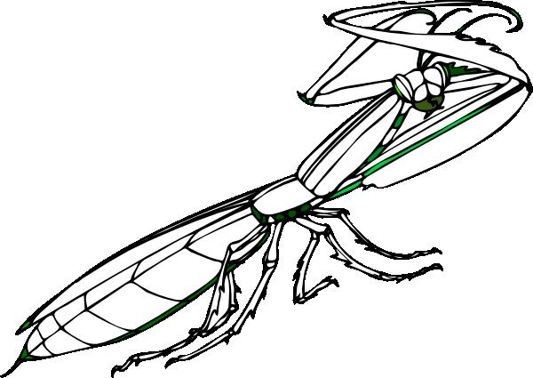 Mantis clipart #14