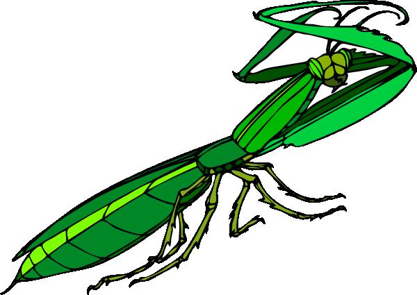 Mantis clipart #3