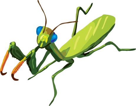 Mantis clipart #12