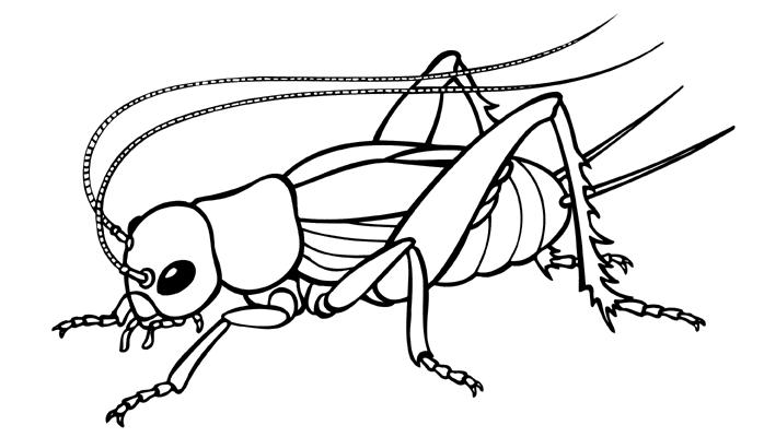 Black & White clipart cricket Clip Clip Art Cricket Images