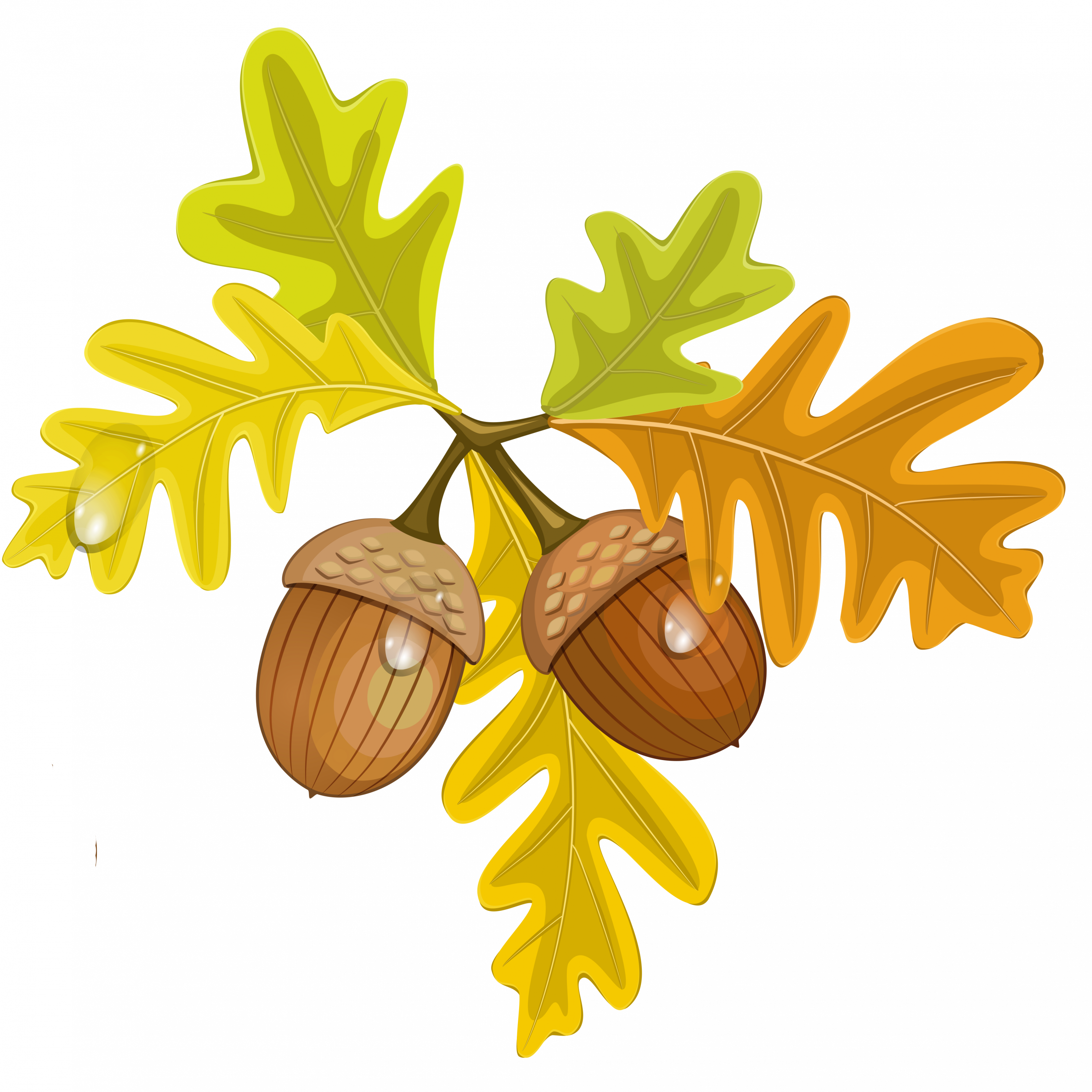 Acorn clipart small Clipart Maple leaves with leaves
