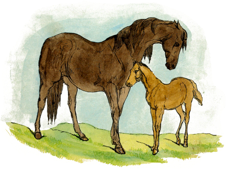 Brown clipart baby horse Mare Art Foal With Download