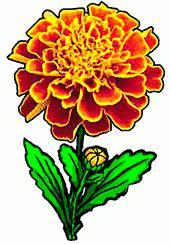 Marigold clipart Flower marigold Free Marigold Clipart