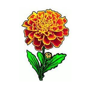 Marigold clipart Marigold Free Polyvore Clipart Clipart
