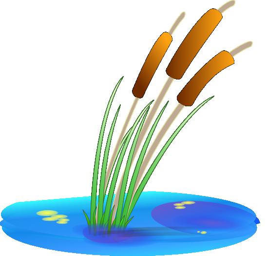 Serene clipart pond plant Art Cliparts Clip Clip Download