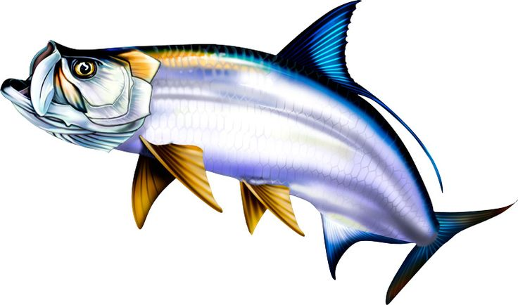 Marine Fish clipart (82+) art Fish clip fish