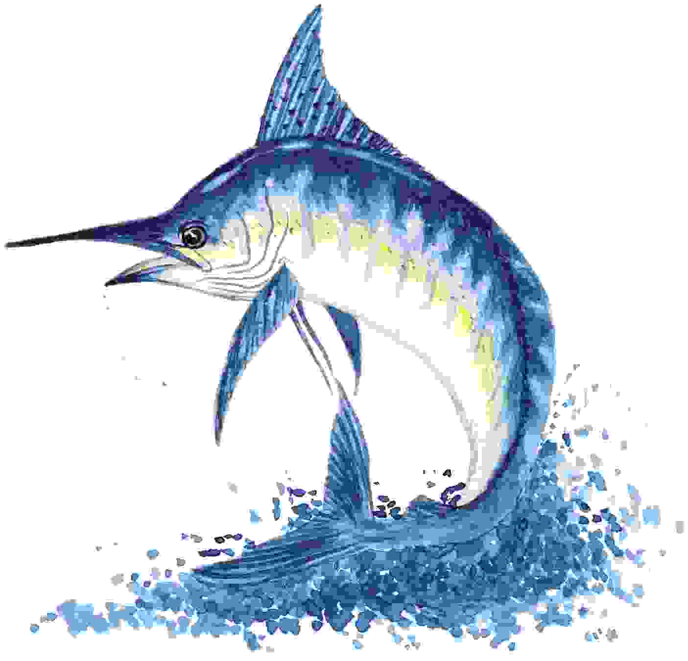 Sailfish clipart blue marlin #5