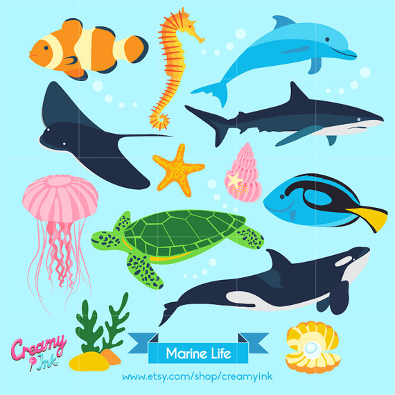 Fins clipart caught fish From Animal Digital Graphics Fish