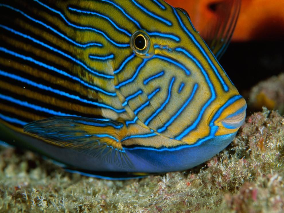 Marine Life clipart body water Creature Dangerous  Photos Sea