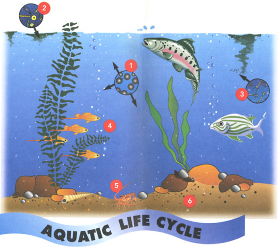 Marine Life clipart body water Science Contains Water Portal School