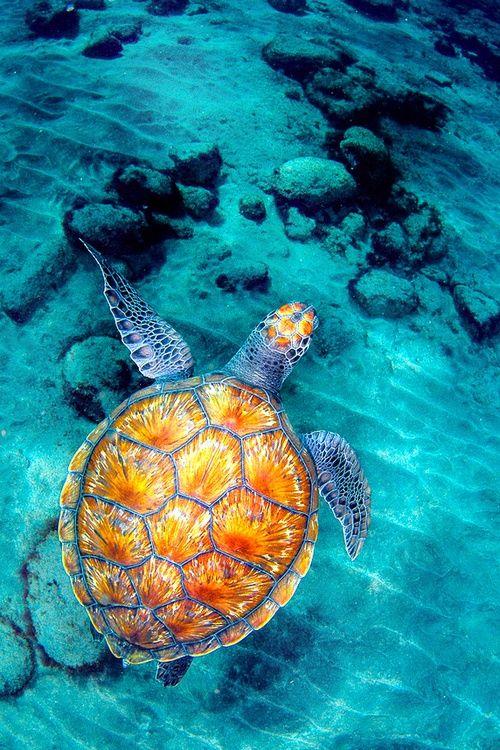 Marine Life clipart body water 20+ Pinterest Best more art
