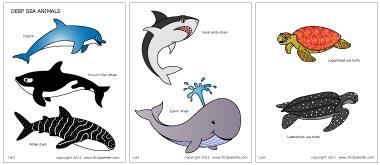 Marine Life clipart deep sea Template Coloring & Download com