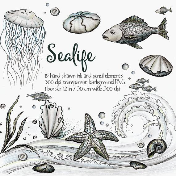 Sea Life clipart jellyfish #12