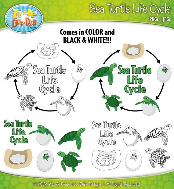 Marine Life clipart green turtle Sea about Includes best turtles