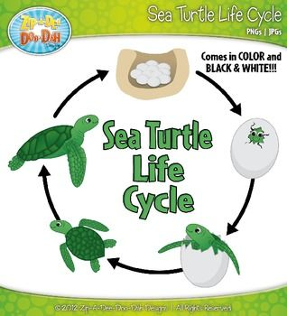 Marine Life clipart green turtle Sea 129 — and best