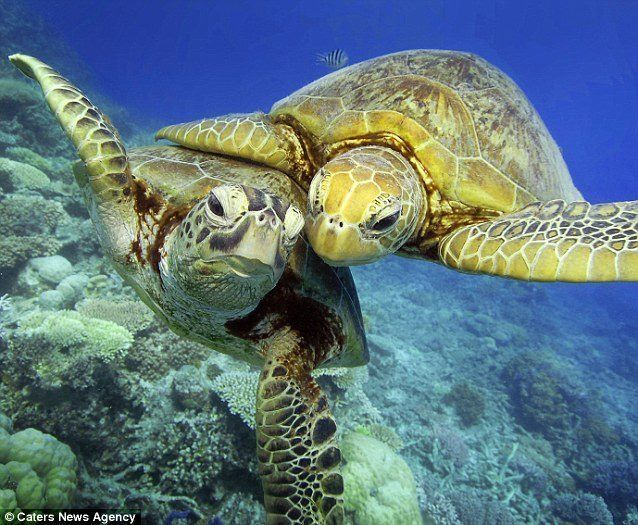Marine Life clipart green turtle Hawaiian Pinterest Best ideas Green
