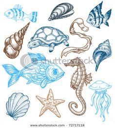 Marine Life clipart sea plant Marine EL Life  Picasa