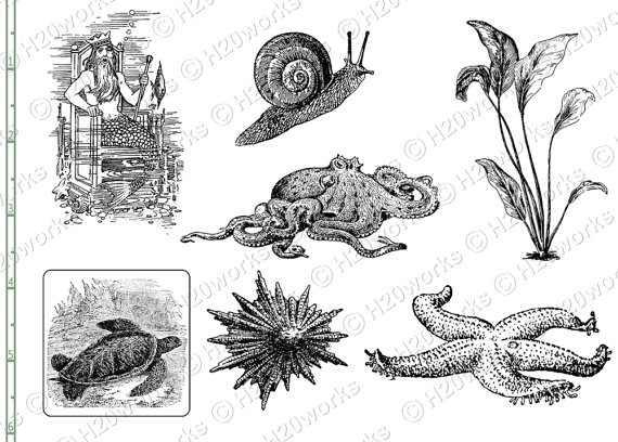 Marine Life clipart sea plant Sea Drawings Illustration White Black