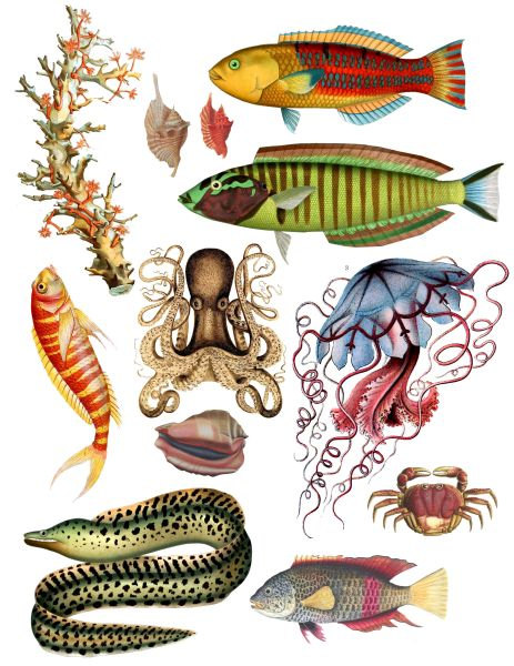 Marine Life clipart sealife Clipart Download Vintage Sea Clipart