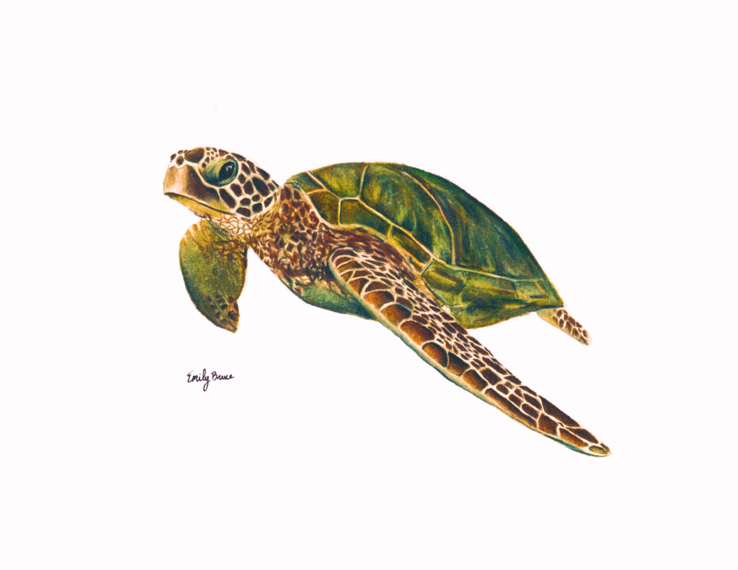 Marine Life clipart turtle swimming 8x10 Green Sea Etsy Sea