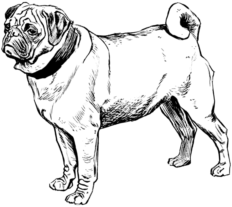 Realistic clipart puppy #6