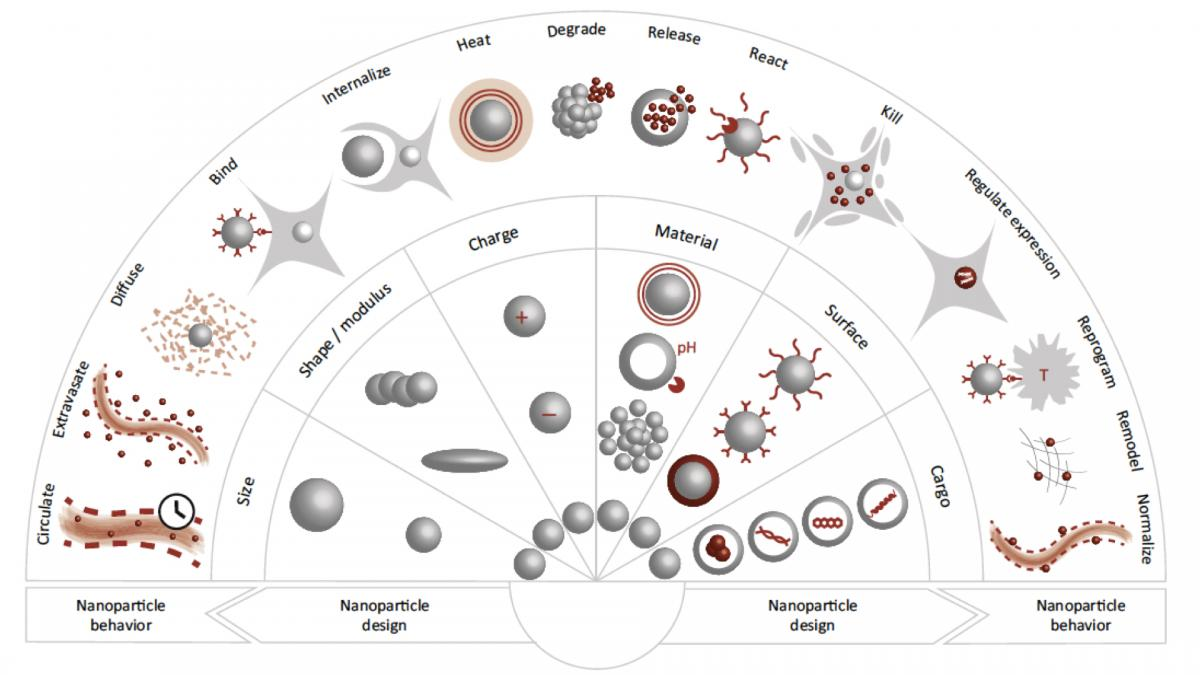 Maters clipart research design Solutions the at nanotechnologies Cancer