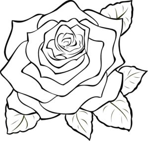 White Rose clipart real Rose Pinterest Clip 85 Uncoloured