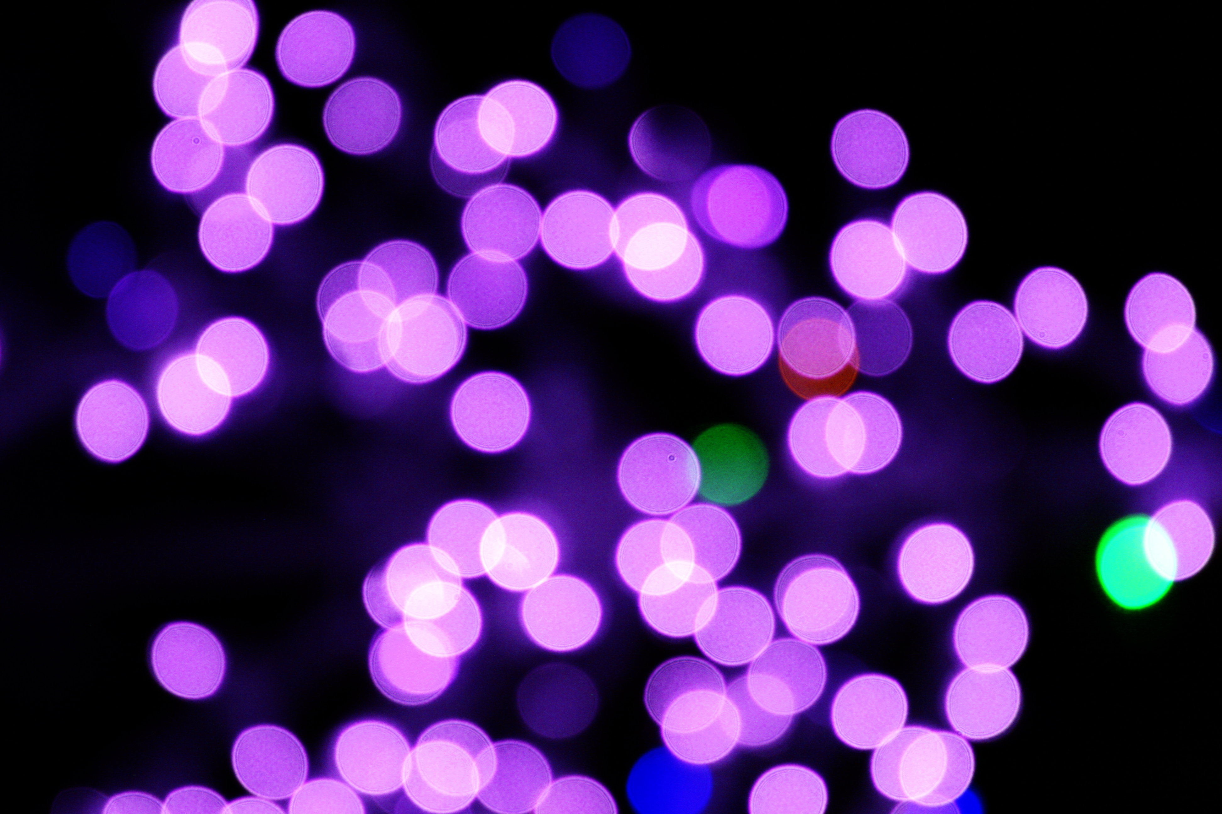 Christmas Lights clipart purple Christmas Pictures Lights Domain Photographs