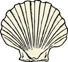 Mauve clipart seashell Tattoos Clam Shell Seashell ShellsClip