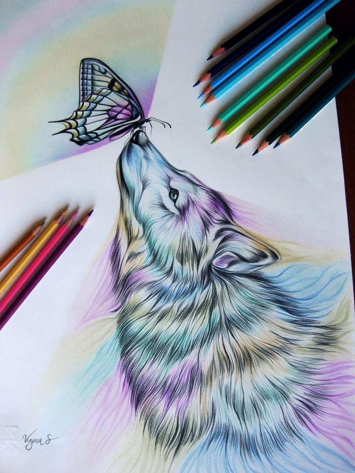 Drawn butterfly ever nature Virginia Best stay wolf nature
