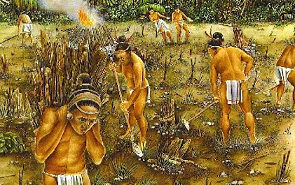 Mayan clipart ancient farming Beds raised planted agriculture swamps