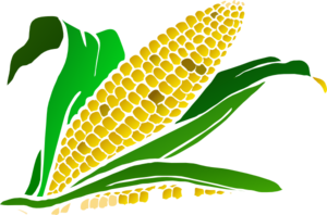Cornfield clipart wheat plant Free Clipart Downloads Images Info