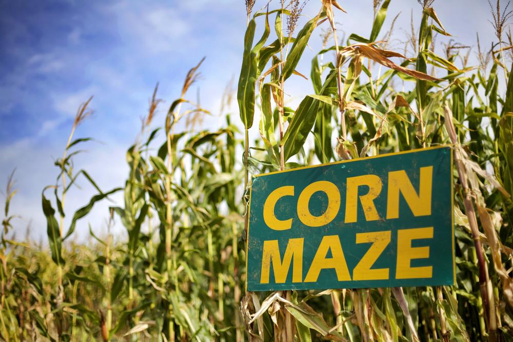 Cornfield clipart corn maze Cornfield Maze sign town in