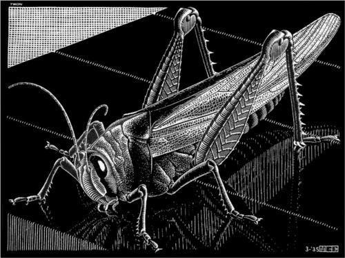 M.c.escher clipart animal Escher C Escher 1935 61