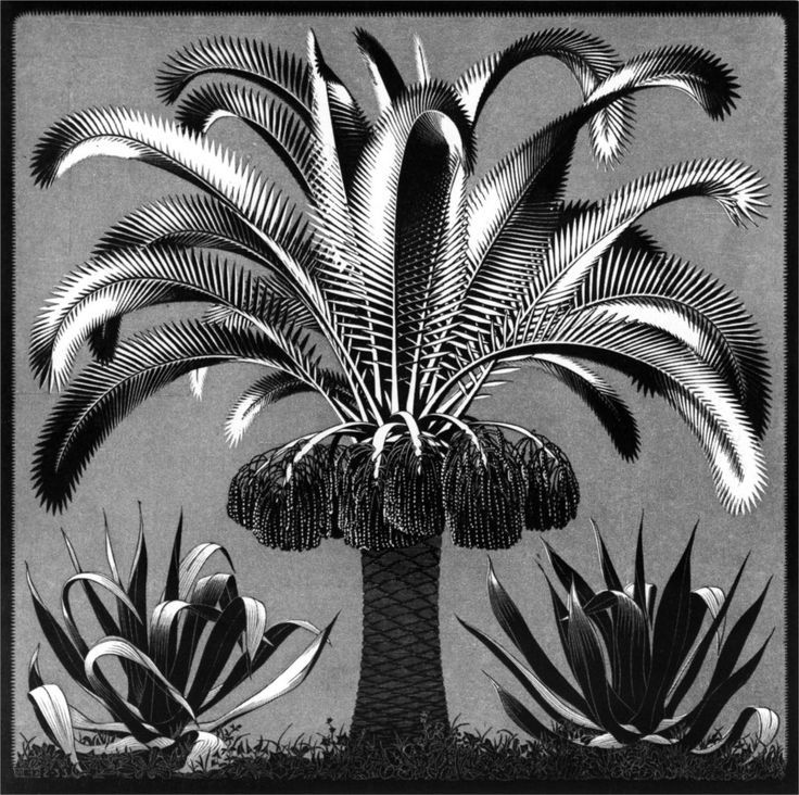 M.c.escher clipart black and white In M Pinterest 1933 images