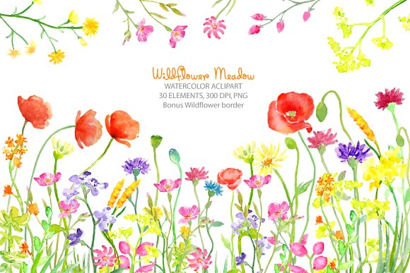 Wildflower clipart flowering plant Meadow Illustrations on flower Market