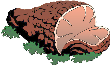 Pork clipart piece meat Art Clipart of Meat Free